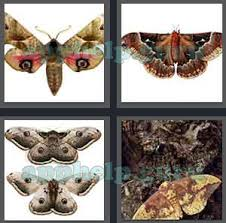 4 pics 1 word all level 3401 to 3500 4 letters answers