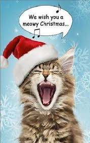 Merry Christmas Cat Meme - we wish you a merry christmas