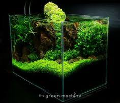 Green Machine Aquascape Red Rock Aquascape By James Findley For The Green Machine Fish