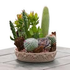 Succulent And Cacti Pictures Gallery Garden Design Medium Cactus Garden Indoor U0026 Office Plants By Plant Type