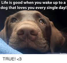 Life Is Good Meme - life is good when you wake up to a dog that loves you every single