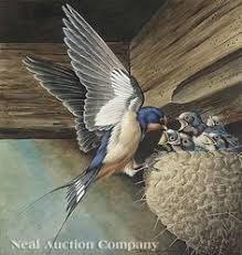 Barn Swallow Nest Pictures Barn Swallow Birds Pinterest Barn Swallow Swallows And Barn