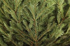 free christmas tree recycling in tuscaloosa start december 26 2015