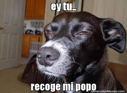Popo Meme - ey tu recoge mi popo meme de perro avieso imagenes memes