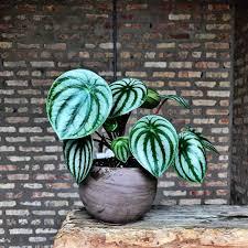 pinterest indiaphelanboyd plants pinterest plants