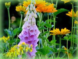 flower nice pink garden summer yellow flower wallpaper hd hd 16 9