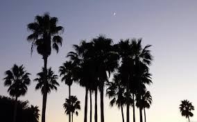 mlewallpapers com dusk with palm trees