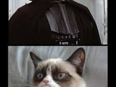 Star Wars Cat Meme - grumpy cat star wars weknowmemes