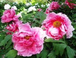 garden flowers names and photos zandalus net