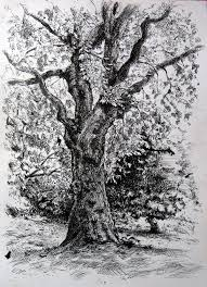 tree drawing my art pinterest drawings paintings and sketches