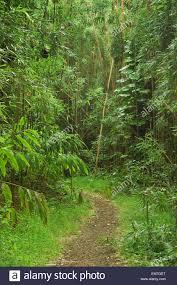 Hawaii vegetaion images Hawaii oahu mt tantalus trail system moleka trail through jpg