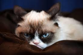 Grumpy Cat Mini Wall Calendar - fluffy grumpy cat we know how to do it