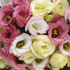 Wedding Flowers For September 16 Best Flowers In Season U0026 Available I Like In Italy August