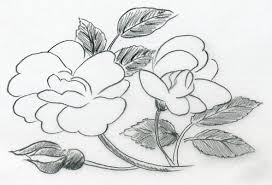 sketch of a rose