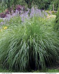 the best plants for borders gardening