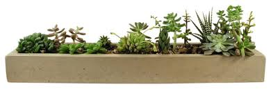 concrete tray planter modern indoor pots and planters by