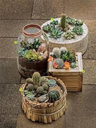 Cactus Garden Ideas 15 Awesome Mini Cactus Gardens Desks Creative And