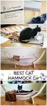 hammock for cats and how to get your cat to love it