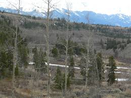 colorado mountain land for sale near denver