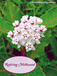 australian native plants pictures and names find milkweed plants and milkweed seeds for monarchs
