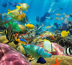 the images for u003e tropical reef fish