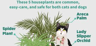 common house plants safe for cats enchanting shade house plants