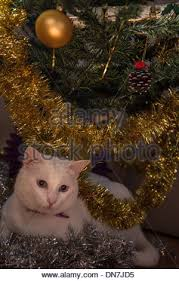 Christmas Decorations In Blue And Brown by White Cat With Blue Eyes In Amongst The Christmas Decorations And
