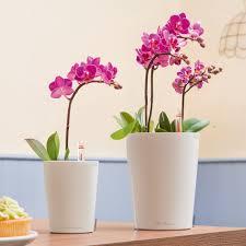 deltini and mini deltini self watering planters lechuza