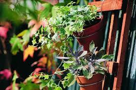 houseplant trellis clay pot trellis backyard projects birds and blooms