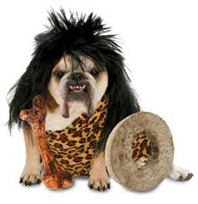 the cutest pet halloween costumes the luxury spot