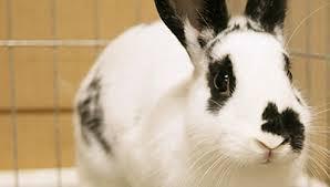 world of rabbit the world of rabbits october 15 2017 kpbs