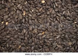 sunflower seeds sunflower seed texture as background black and