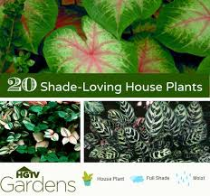 Indoor Tropical Plants For Sale - 20 gorgeous indoor shade house plants container gardening