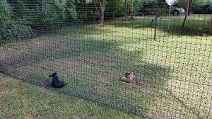 testimonials dog fences