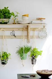 plante cuisine cultiver des plantes aromatiques sur votre balcon roselia
