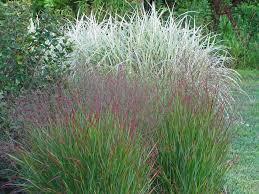 see ya ornamental grasses the obsessive neurotic gardener