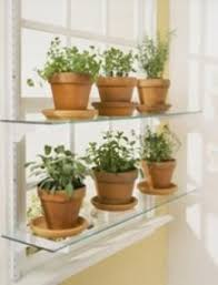 window herb harden what is the next step herbs garden shelving and herbs