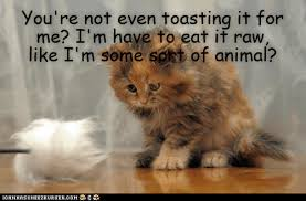 Cat Toast Meme - s merbils are best toasted human lolcats lol cat memes