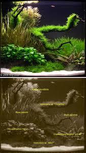 43 best vivarium images on pinterest vivarium reptiles and