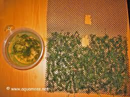 aquatic moss how to create a moss wall create backdrop using