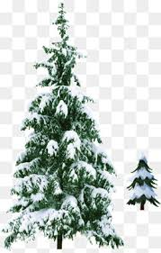 christmas tree with snow snow christmas tree png vectors psd and icons for free