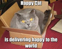 Happy Cat Meme - image 18041 happy cat know your meme