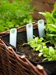 how to grow an herb bed hgtv related to herbs and herb gardens