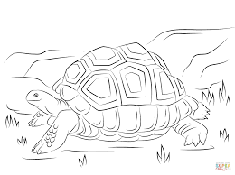 nina pinta santa maria coloring pages cute aldabra giant tortoise coloring page free printable