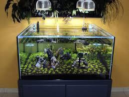 best led light for planted tank best diy planted aquarium led lighting www lightneasy net