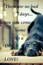 schöne hundesprüche dogs quotes dogs who give us unconditional