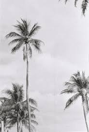 109 best palm trees u003c3 images on pinterest places nature and