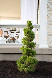 Front Porch Topiary 5 Tips For Styling A Covered Porch Room For Tuesday
