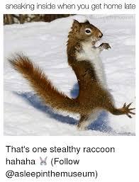 Meme Generator Raccoon - 25 best memes about memes memes meme generator