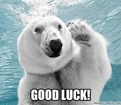 Good Luck Cat Meme - lovely good luck cat meme good luck animal meme images kayak